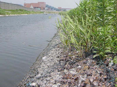PVC coating gabion mattress are installed on the river bank and several plants on them.